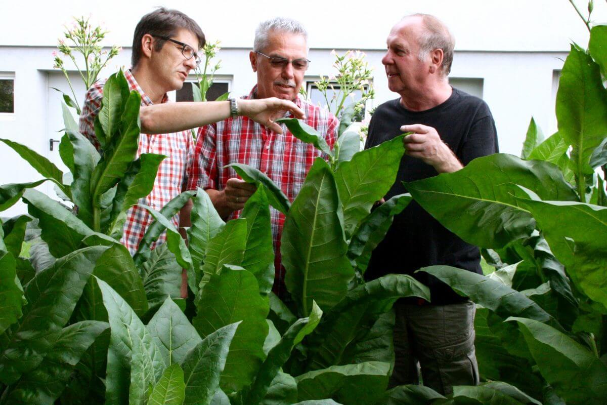 hugenotten-museum-friedrichstal-tabakprojekt-bnn-12-8-2